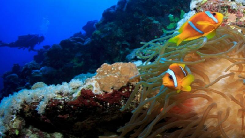 CEMSE AMCS STAT Coral Reef Fish