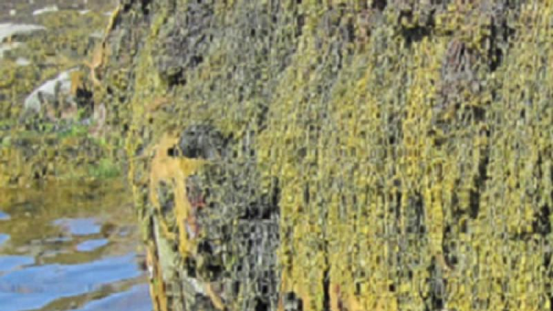 CEMSE CBRC Significance Of Seaweed