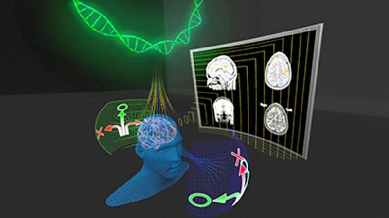 CEMSE STAT AMCS Stimulating Deeper Insights Into Brain Function