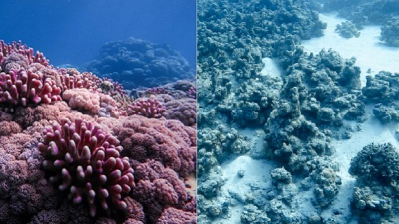 KAUST CEMSE STAT ECRC MARS AMCS ERSE Changing How We Predict Coral Bleaching
