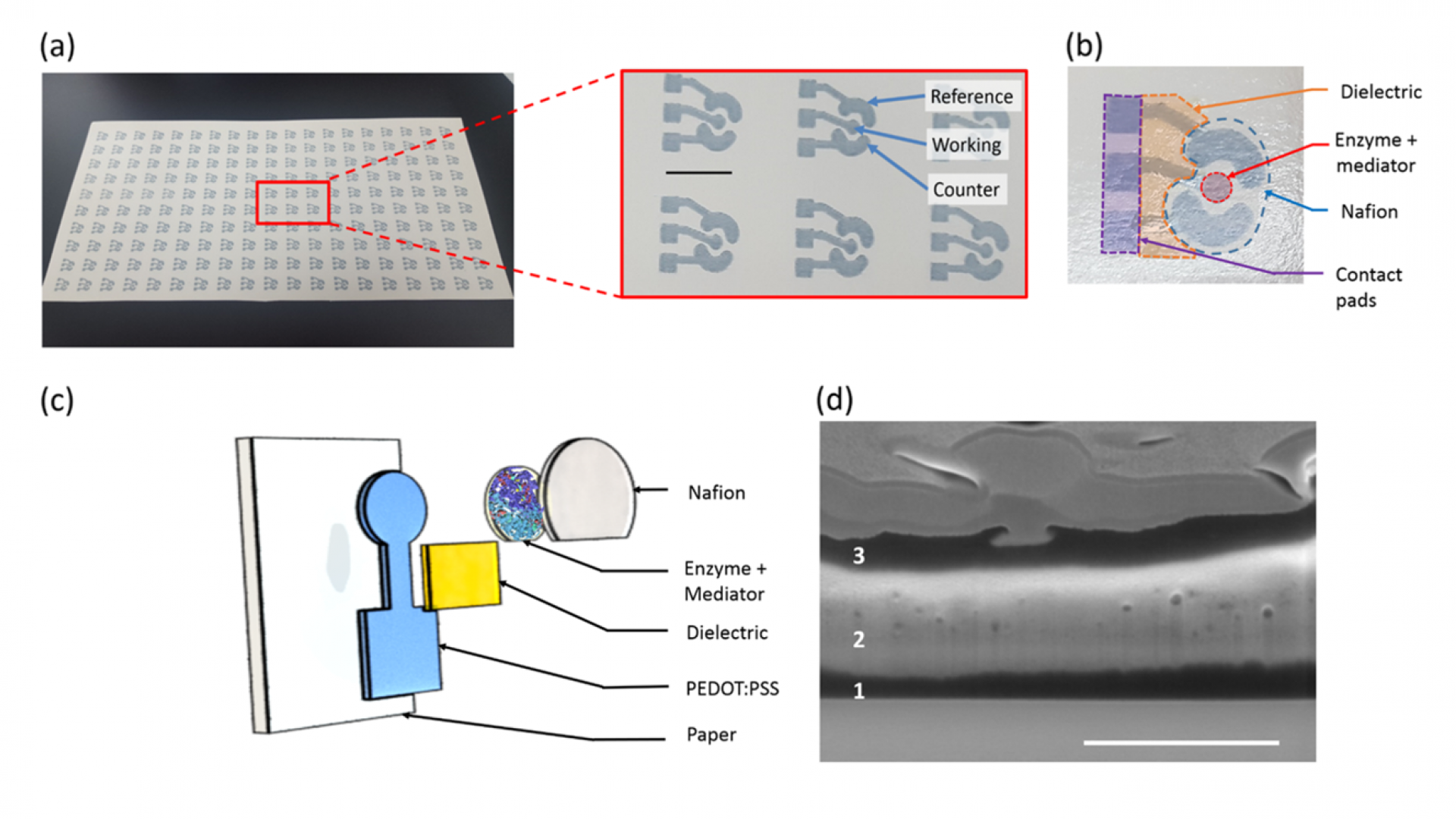 A fully inkjet-printed disposable glucose sensor on paper