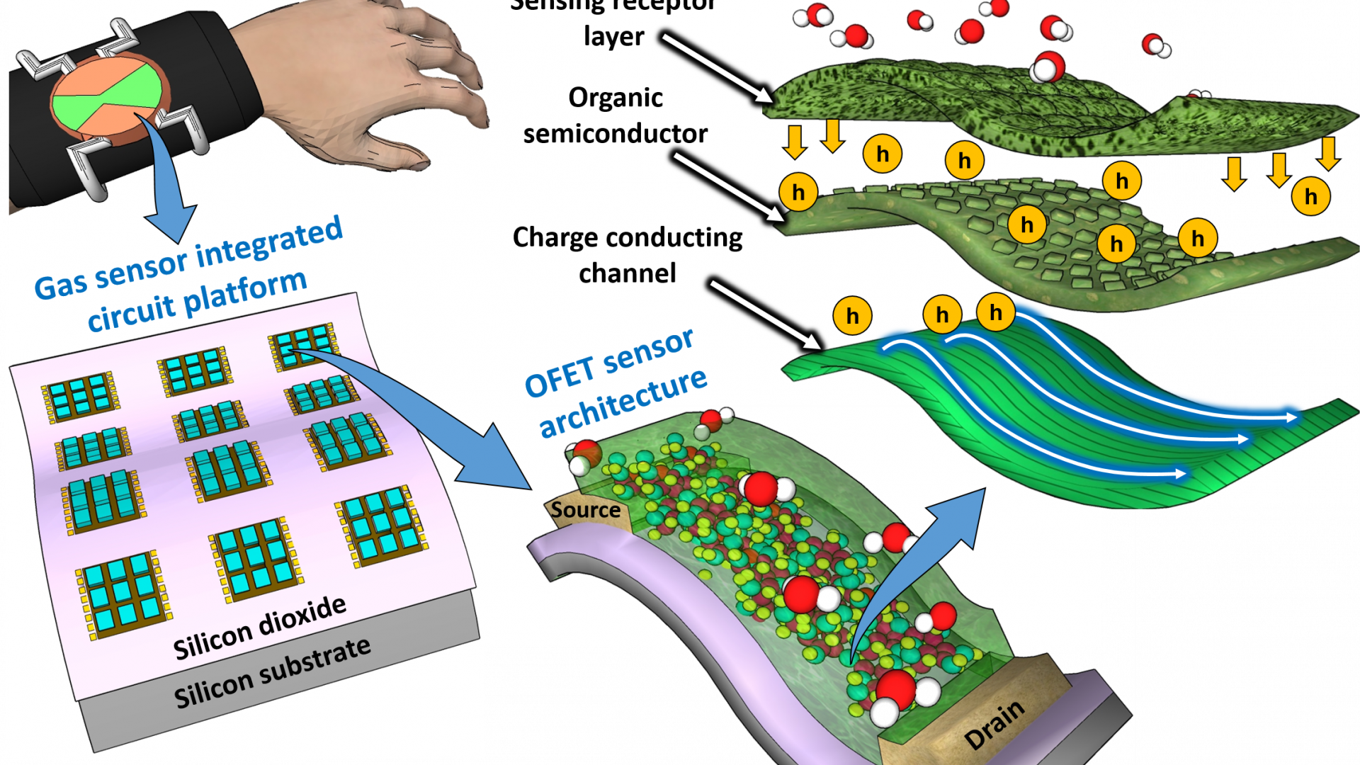 Organic field-effect transistor-based flexible sensors†