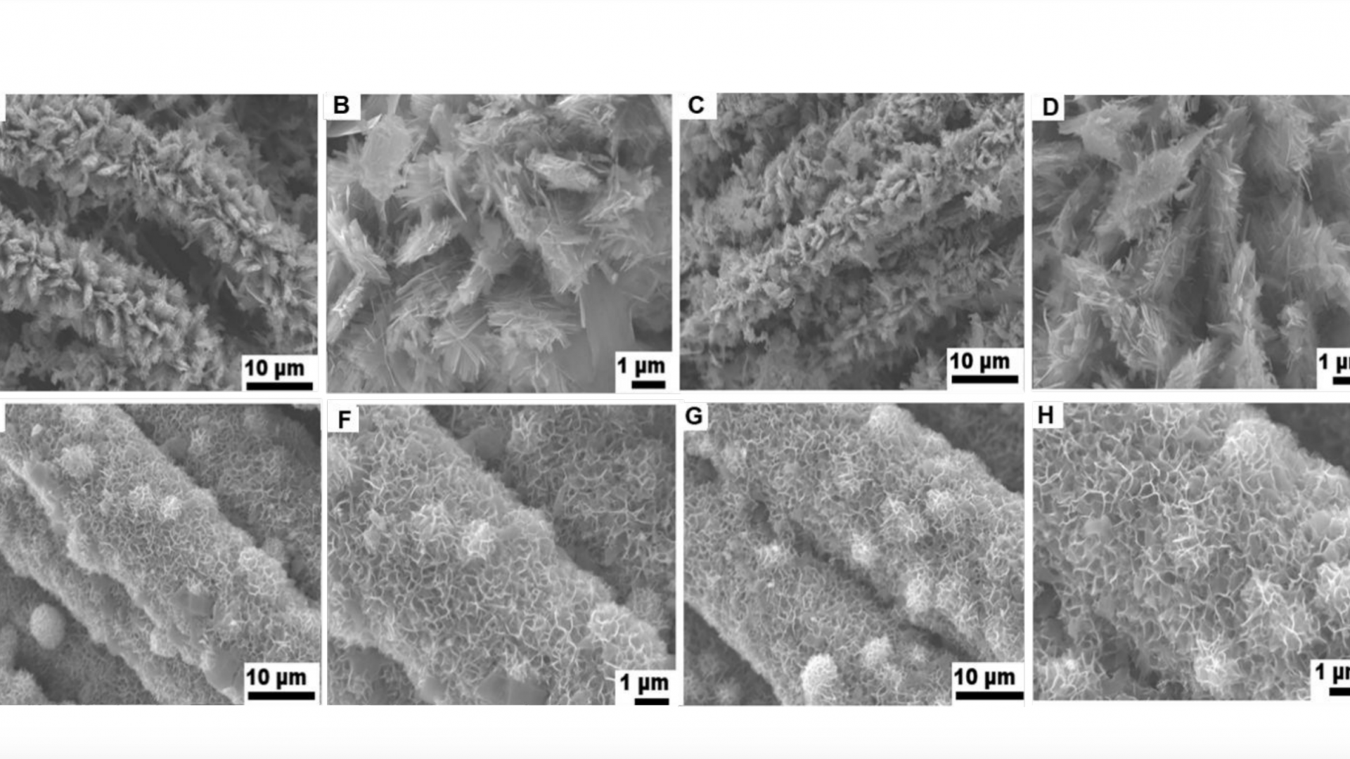 Growth of large-scale MoS2 nanosheets on double layered ZnCo2O4 for real-time in-situ H2S monitoring in live cells